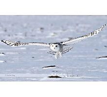 Winged Messenger Photographic Print