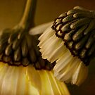 Whispering sweet nothings by Celeste Mookherjee