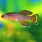 Nothobranchius korthausae Yellow by Vern Treat