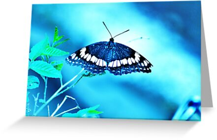 Blue Butterfly by Marsha Ambrose