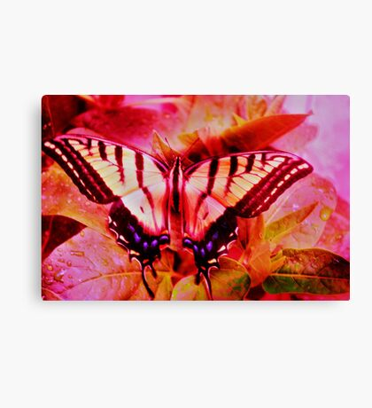 Psychedelic Swallowtail Butterfly Canvas Print