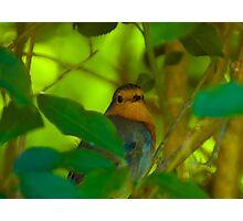 Backlit Robin  Photographic Print