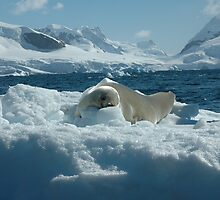 Seal in Paradise by Crispel