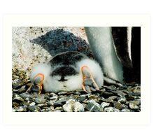 Penguin Chick Sunbathing Art Print