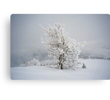 Small Mountain Tree in Snow - landscape Canvas Print