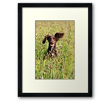 Out of the flowers Framed Print