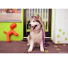 Paws - Katie outside the pet shop Photographic Print