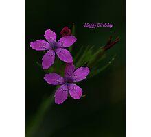 Happy Birthday Viv ! Photographic Print