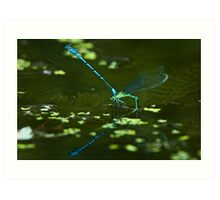 Damsels on the pond with reflection Art Print