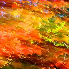 Fall impression 717 - 2011 by Joseph Rotindo