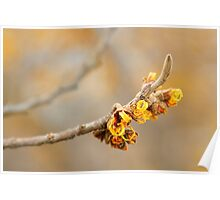 Winter's Flowers - Witch Hazel II Poster