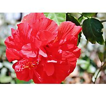 Red Flower Photographic Print
