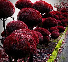 topiary by Bruce  Dickson