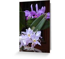Orchids - Orquídeas Greeting Card