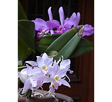 Orchids - Orquídeas Photographic Print