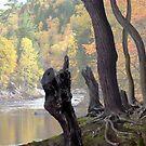 Old Roots by Igor Zenin