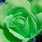 Cheerful Green by G.T.S Photos