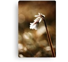 White bell Canvas Print
