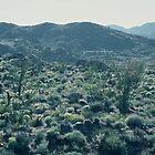 Desert in Spring #2, Anza-Borrego Desert by Diana Sproul