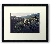 Desert Spring Bloom #3, Anza-Borrego Framed Print