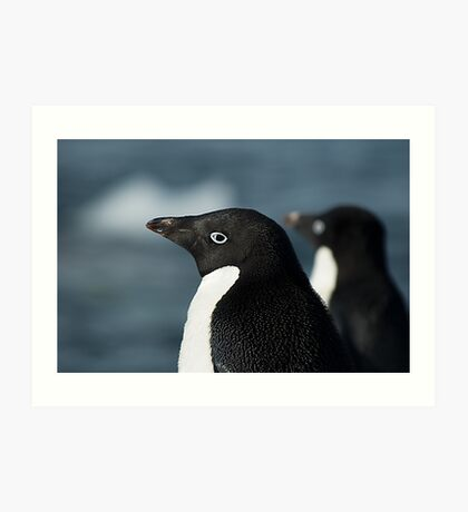 Adelie Penguin Side View Art Print