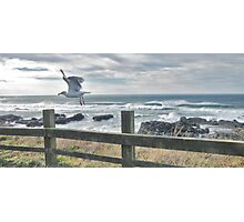 Pacific Northwest Seagull Photographic Print