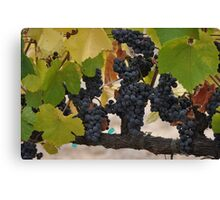 Pinot Noir Clusters  Canvas Print