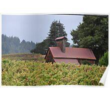 Old Apple Dryer Amongst The Vines Poster