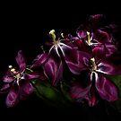 Faded Purple Tulips by Ann Garrett