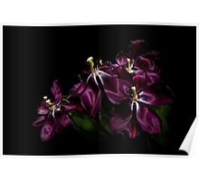 Faded Purple Tulips Poster