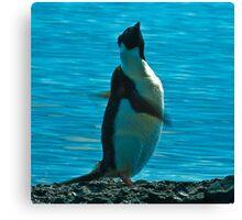 Penguin Swirl Canvas Print