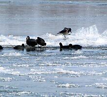 Crow & Black Birds by branko stanic