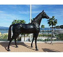 Shergar Is Alive And Well And Living In Cap Ferrat Photographic Print