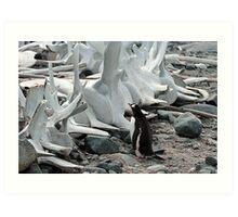 Penguin and Whale Bones Art Print