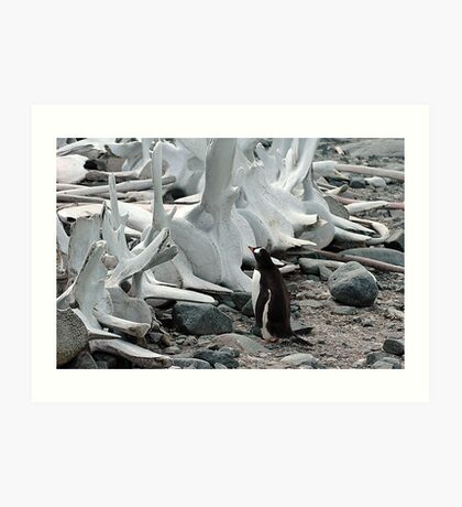 Penguin and Whale Bones Art Print