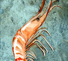 One Shrimp by Elaine Hodges