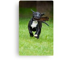 Bark 'in' Dog Canvas Print