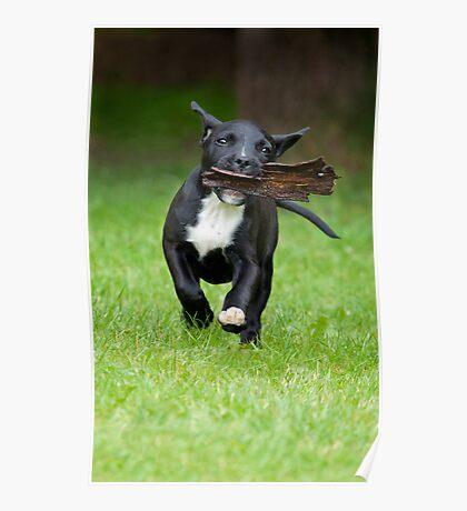 Bark 'in' Dog Poster