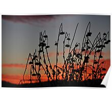Old Thistles At Sunset  Poster
