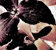 Wildflower Art by MissDawnM