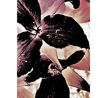 Wildflower Art Photographic Print