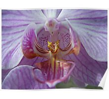 stripey orchid Poster