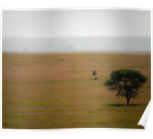 Soft Landscape with Large Acacia, Serengeti, Tanzania Poster