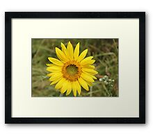 Young Sunflower Framed Print