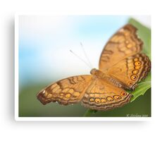 Brown and orange butterfly Canvas Print