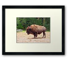 The Buffalo Framed Print