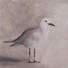 Seagull by Debbie Hetzel/Piro