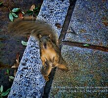 Squirrel Texas Ranger at the State House in Austin by Jack McCabe