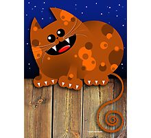 CALICO CAT Photographic Print