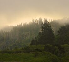 Forest and Fog by John Butler